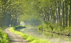 Trees along the Canal du Midi