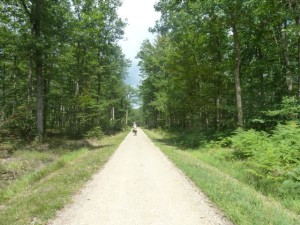 Bicycling through the Chambord forest
